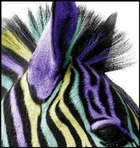 The Velvet Zebra paperback store