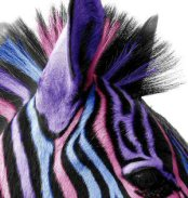 The Velvet Zebra eBook store