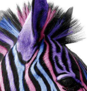 The Velvet Zebra eBook store